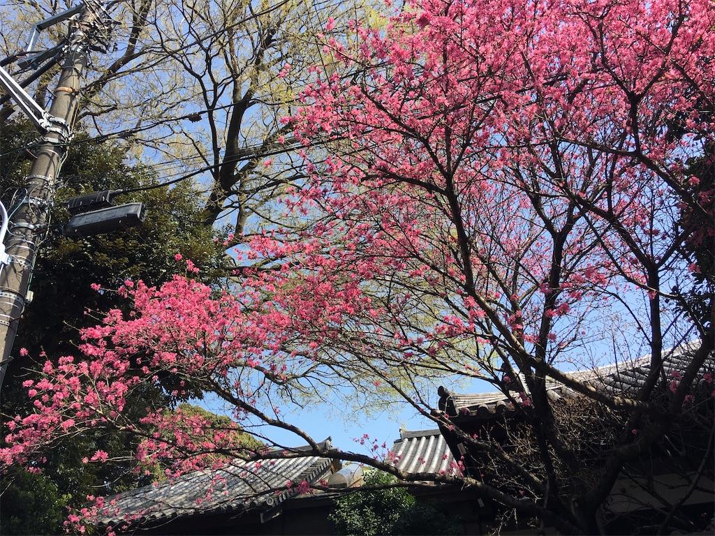 f:id:TokuheiKumagai:20200404212414j:image