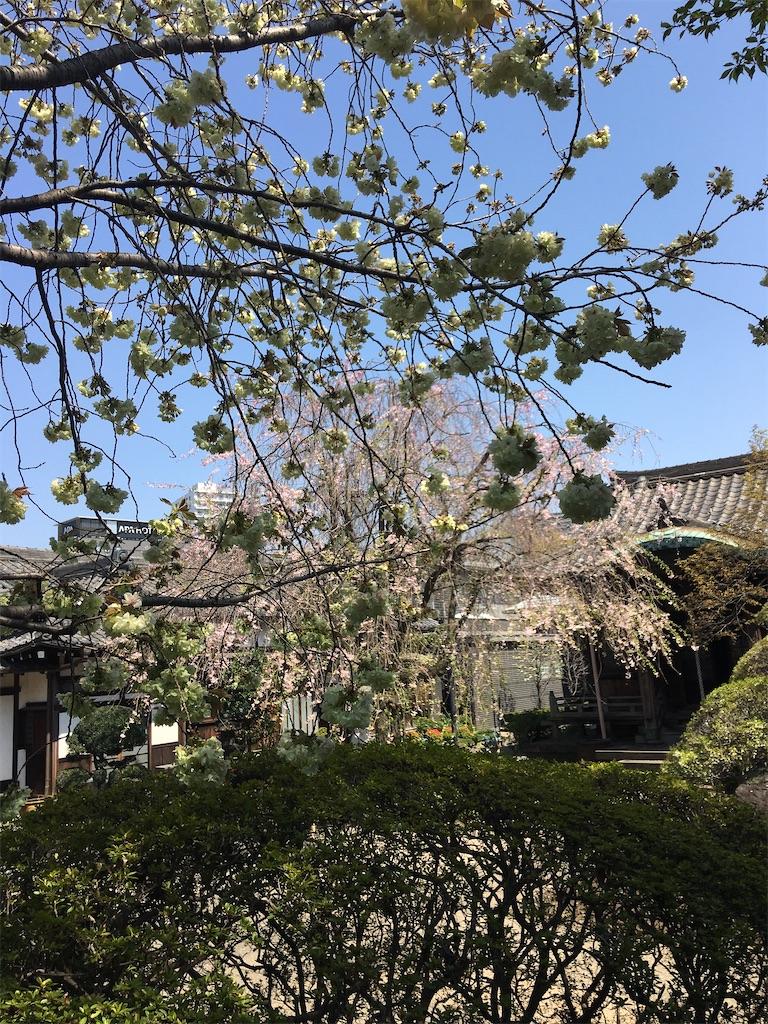 f:id:TokuheiKumagai:20200404212436j:image