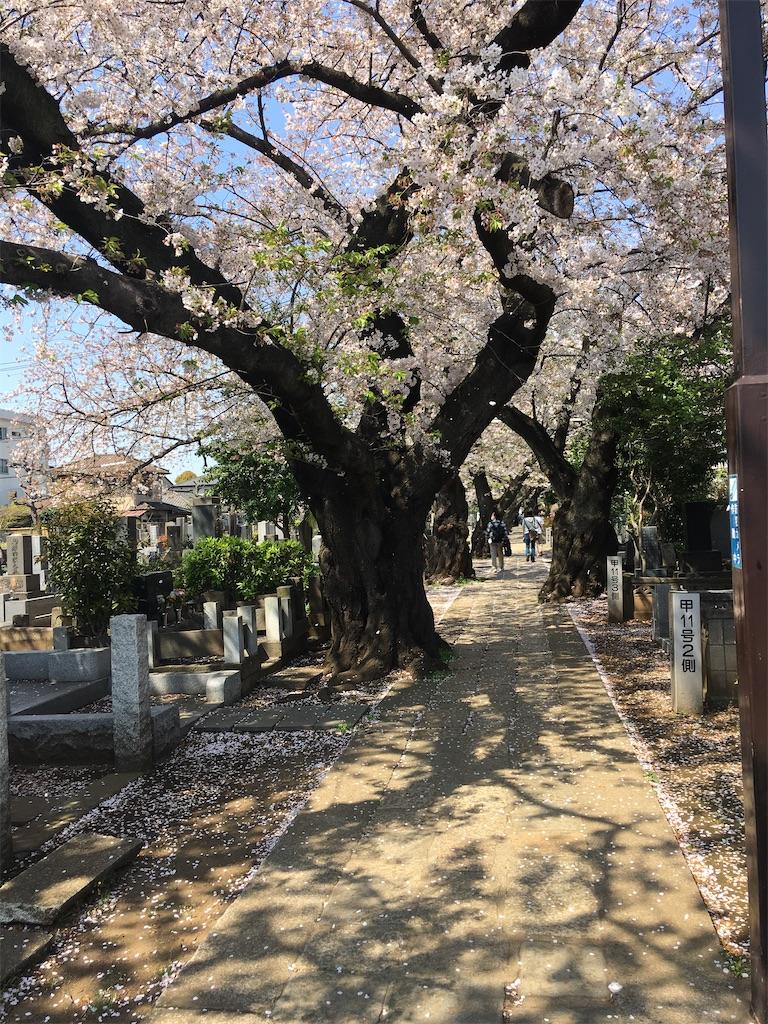f:id:TokuheiKumagai:20200404212447j:image
