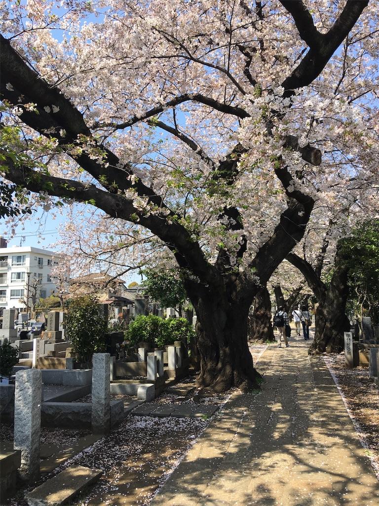 f:id:TokuheiKumagai:20200404212455j:image