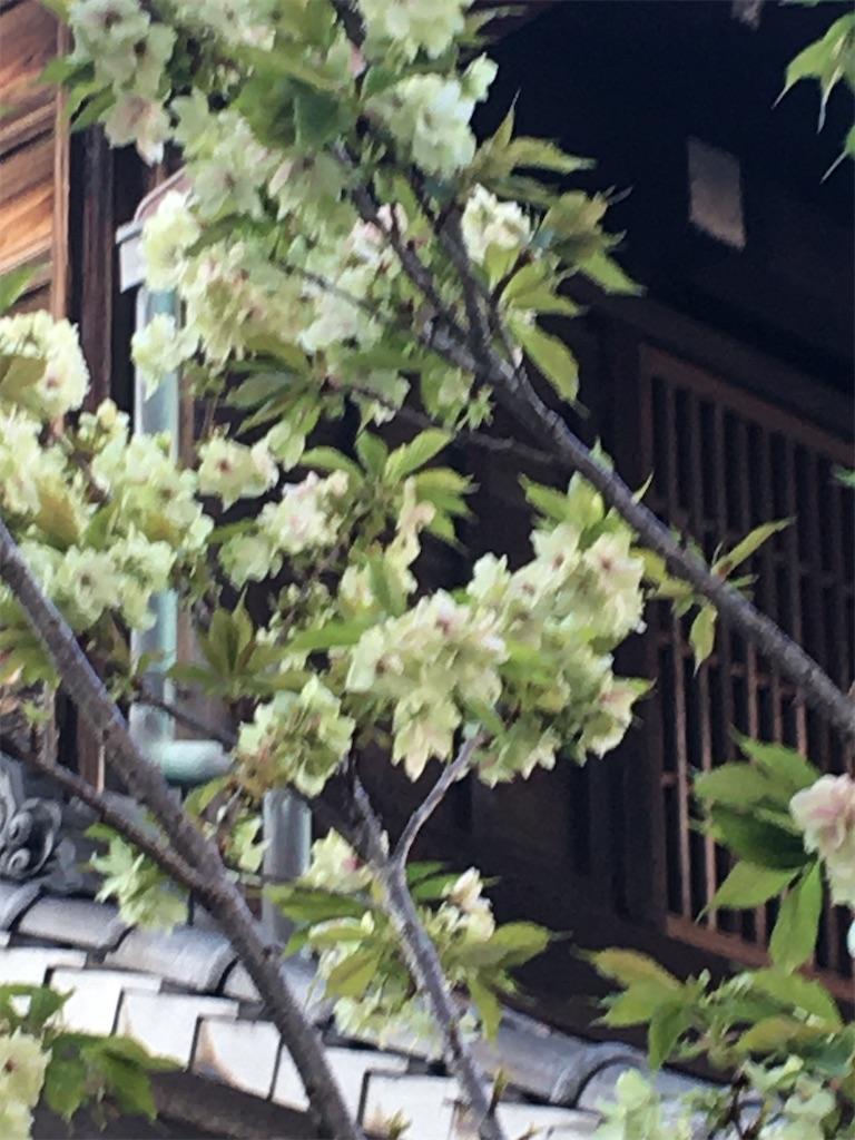 f:id:TokuheiKumagai:20200406223230j:image