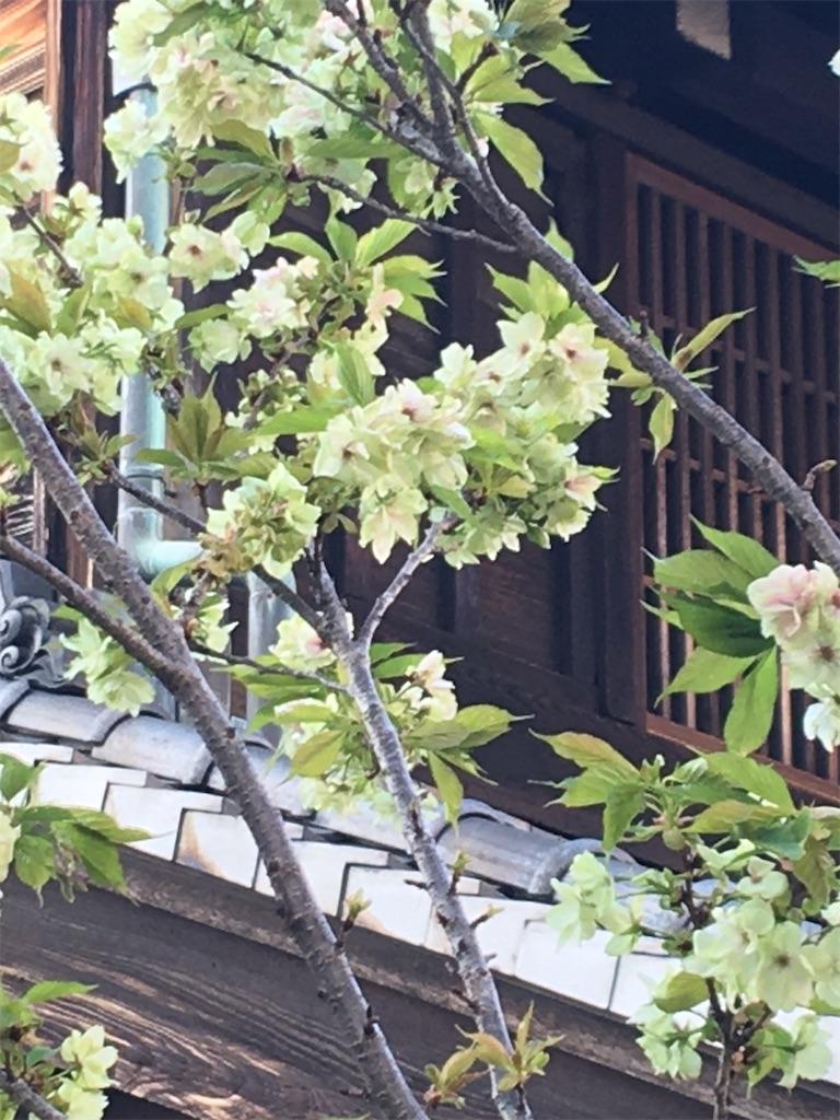 f:id:TokuheiKumagai:20200406223234j:image