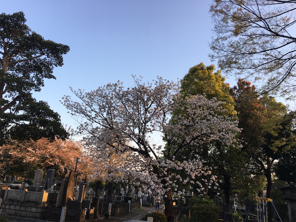 f:id:TokuheiKumagai:20200406224637j:image