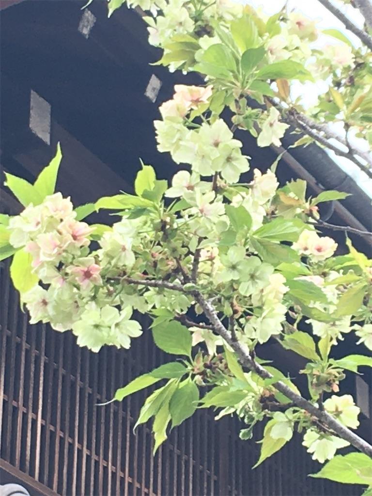 f:id:TokuheiKumagai:20200407190254j:image