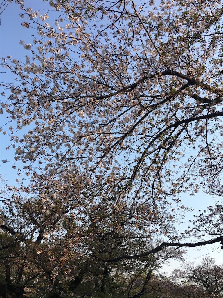 f:id:TokuheiKumagai:20200408194232j:image