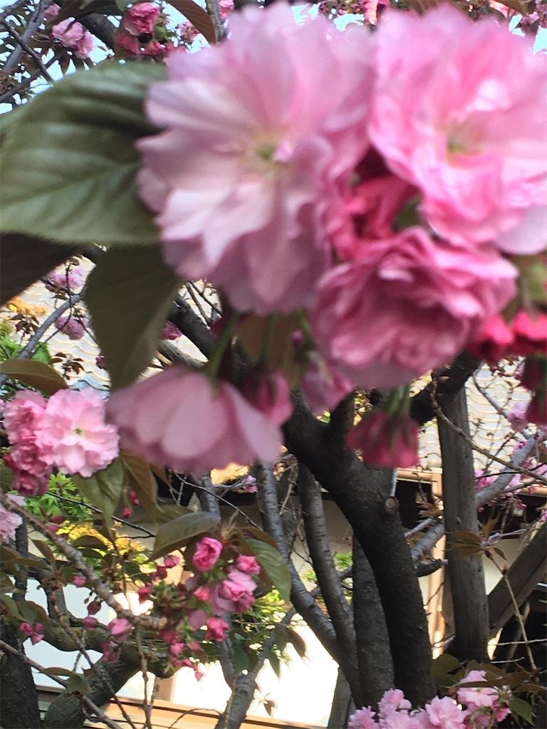 f:id:TokuheiKumagai:20200408194307j:image