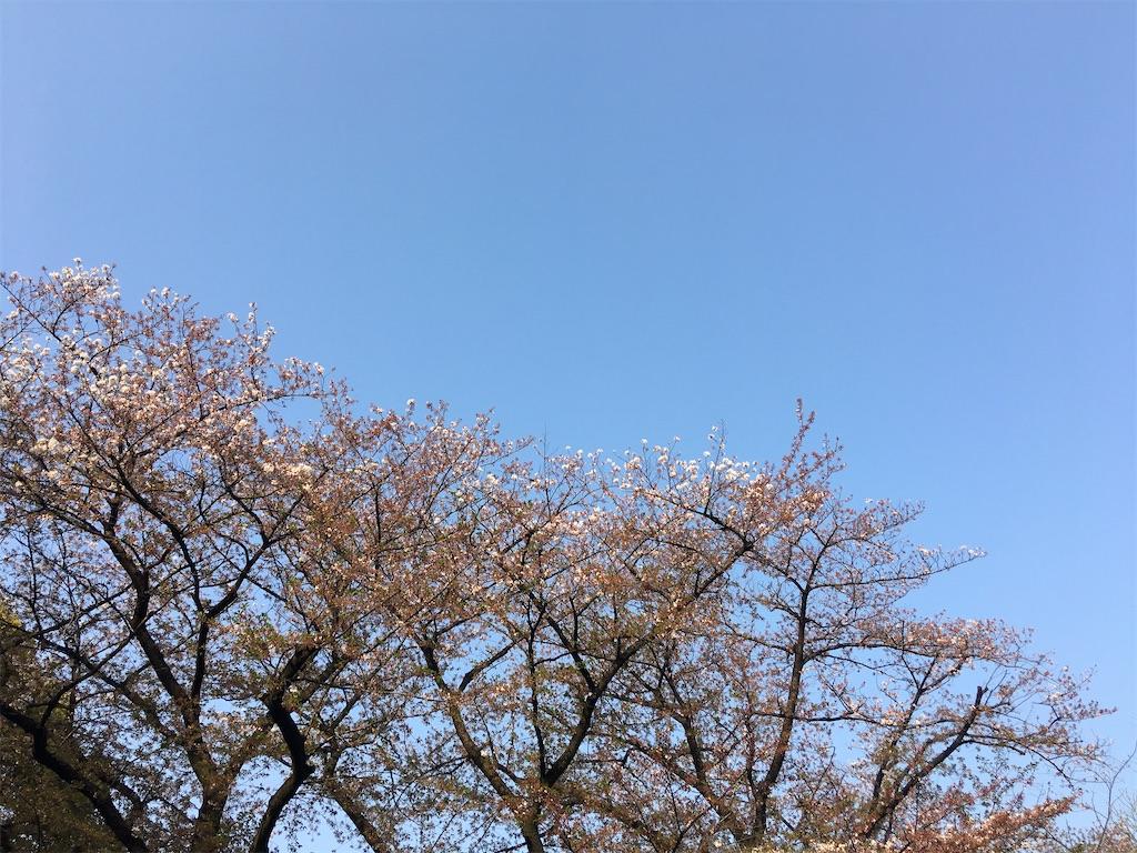 f:id:TokuheiKumagai:20200408194350j:image