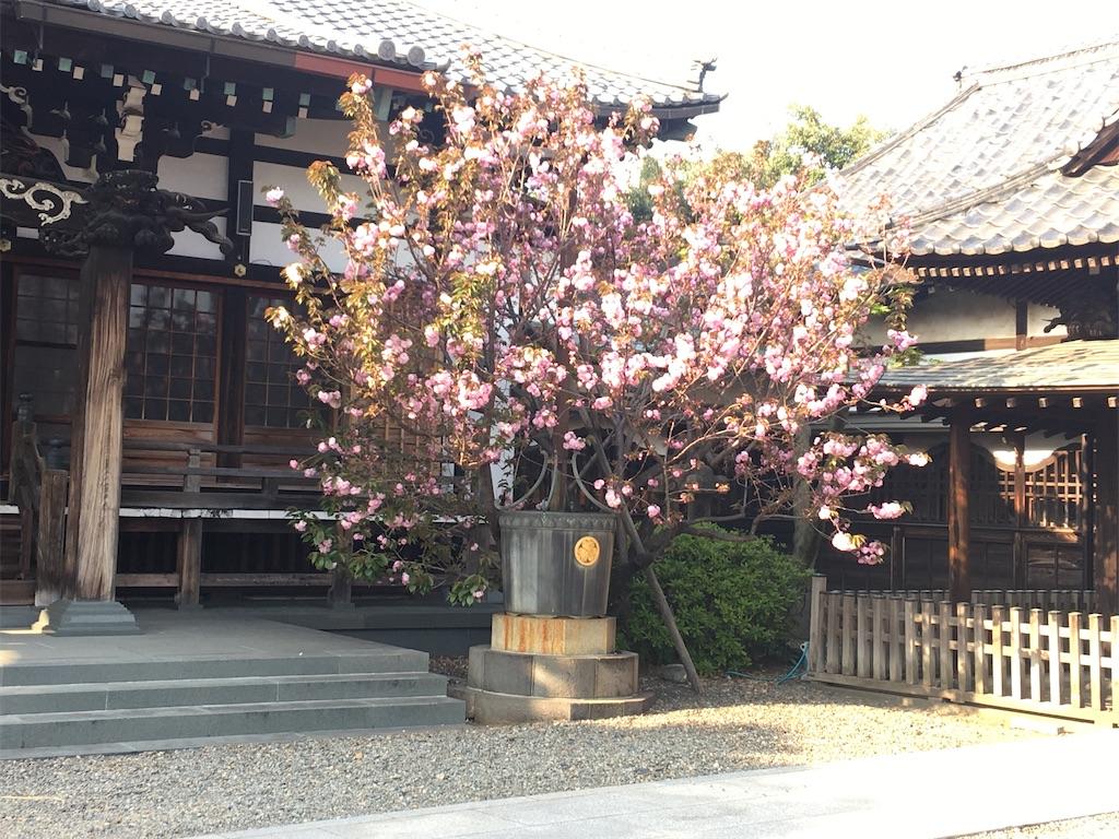 f:id:TokuheiKumagai:20200408194356j:image