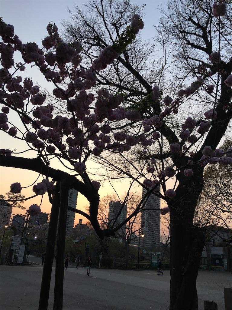 f:id:TokuheiKumagai:20200408194404j:image