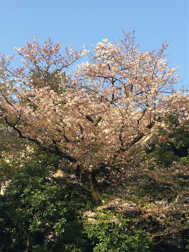 f:id:TokuheiKumagai:20200408194452j:image