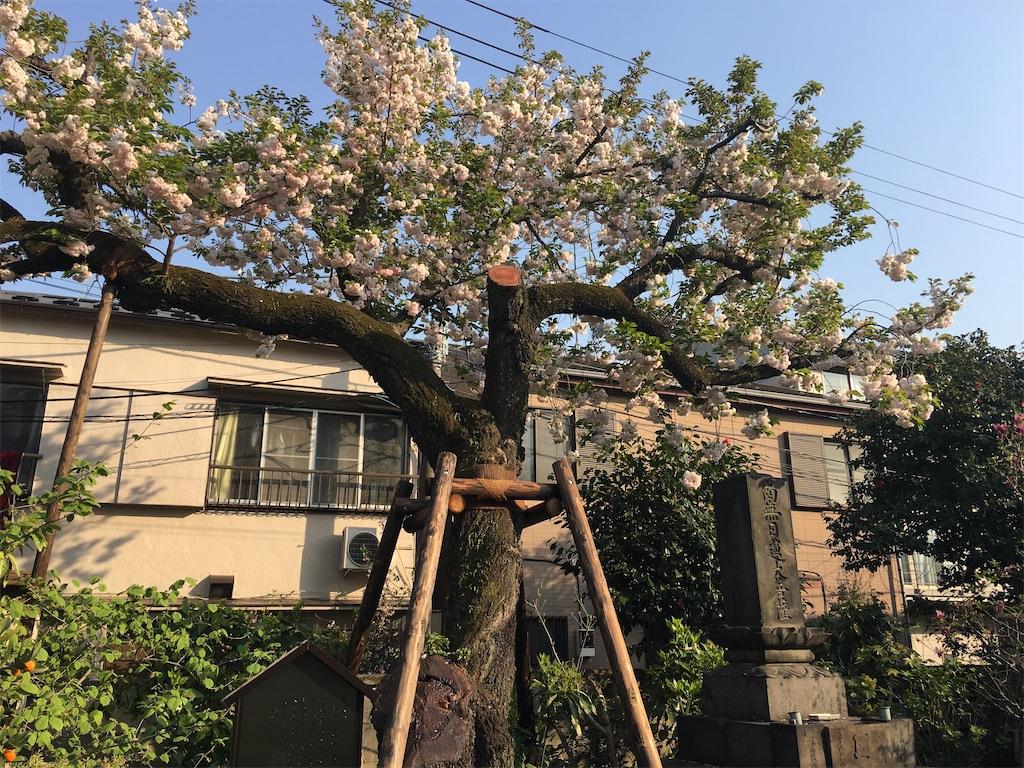 f:id:TokuheiKumagai:20200408194545j:image