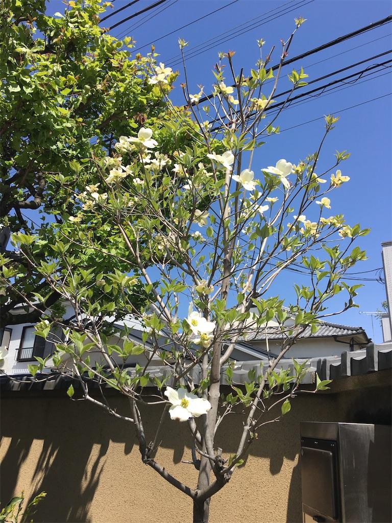 f:id:TokuheiKumagai:20200414213606j:image