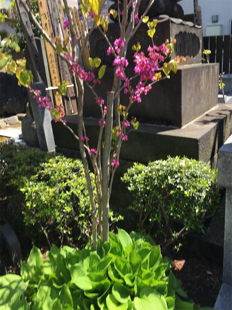 f:id:TokuheiKumagai:20200414213738j:image