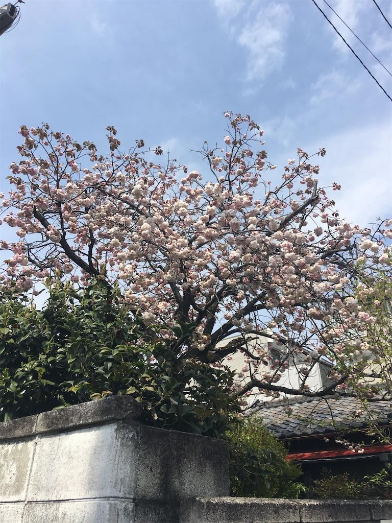 f:id:TokuheiKumagai:20200418230440j:image