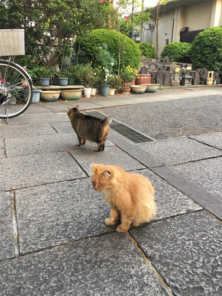 f:id:TokuheiKumagai:20200425222441j:image