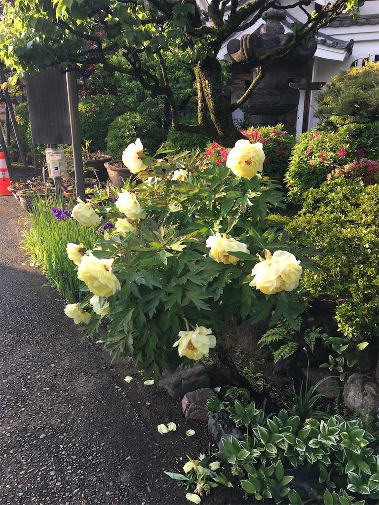 f:id:TokuheiKumagai:20200428213924j:image