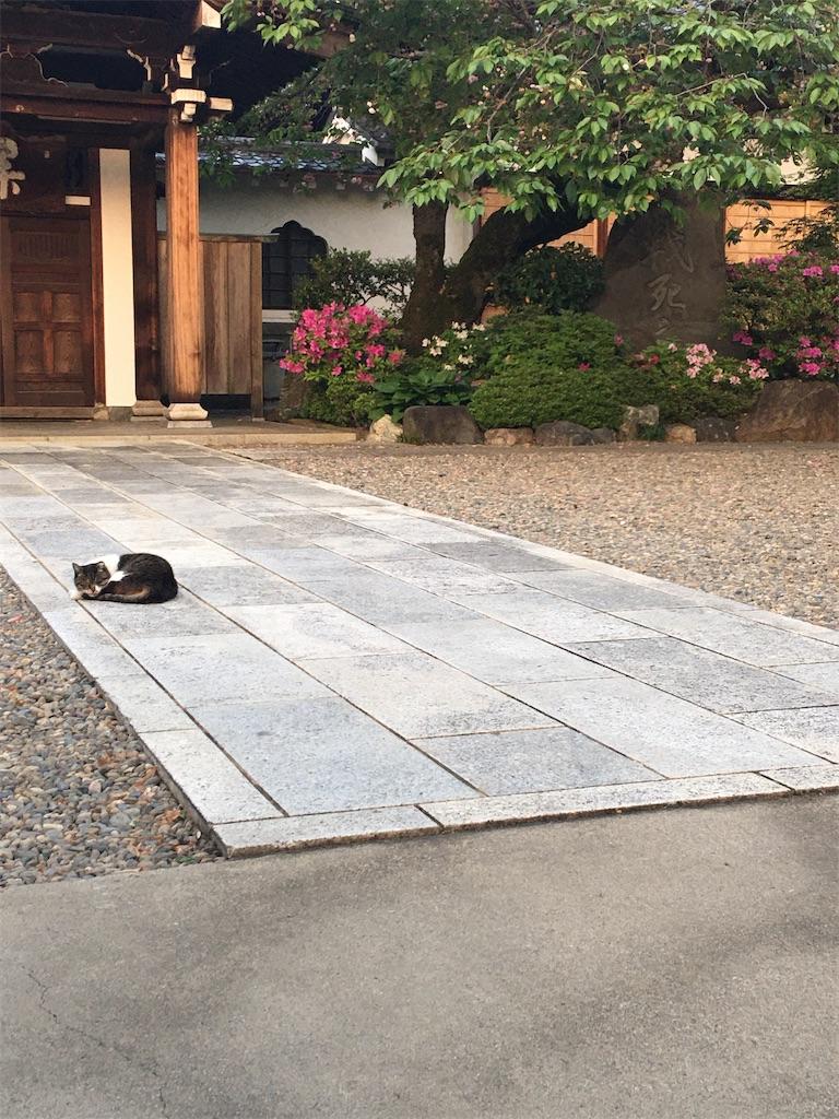 f:id:TokuheiKumagai:20200501195019j:image
