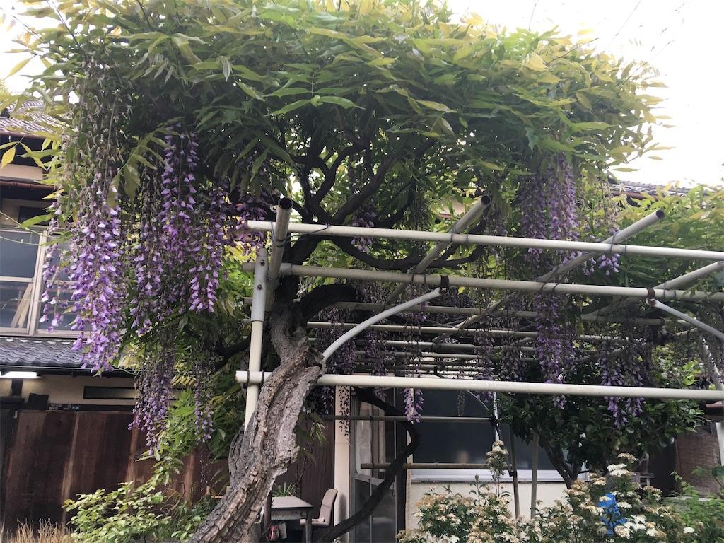 f:id:TokuheiKumagai:20200504222647j:image