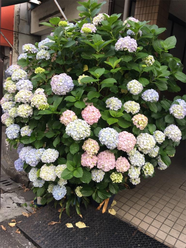 f:id:TokuheiKumagai:20200602232846j:image