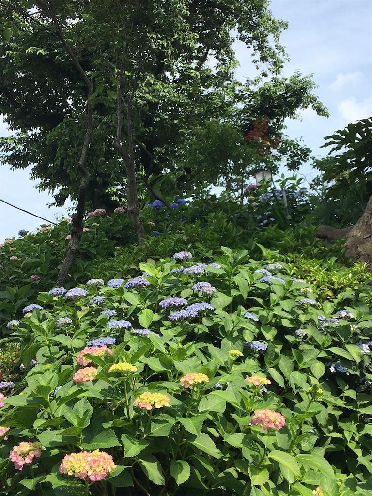 f:id:TokuheiKumagai:20200604225117j:image