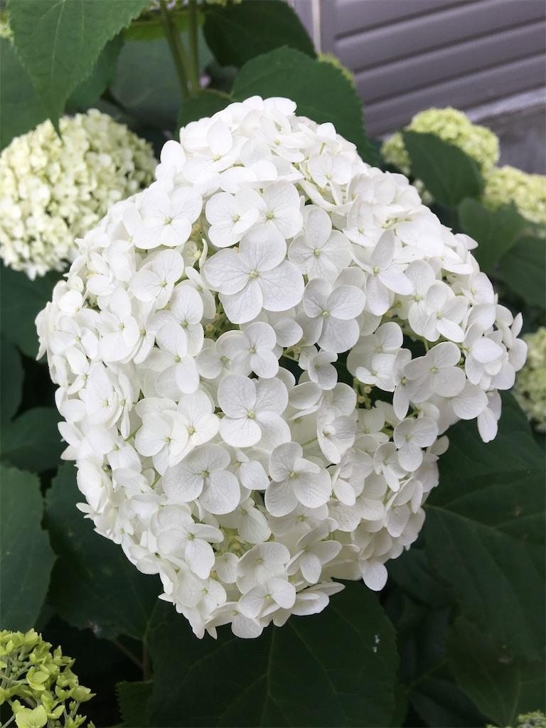 f:id:TokuheiKumagai:20200604225219j:image