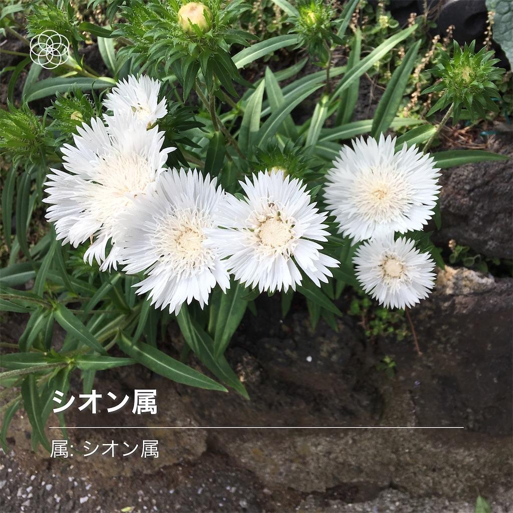 f:id:TokuheiKumagai:20200604225242j:image