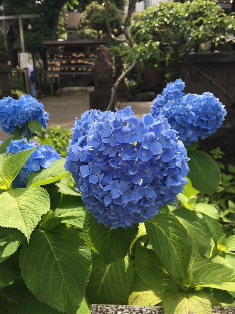 f:id:TokuheiKumagai:20200604225324j:image