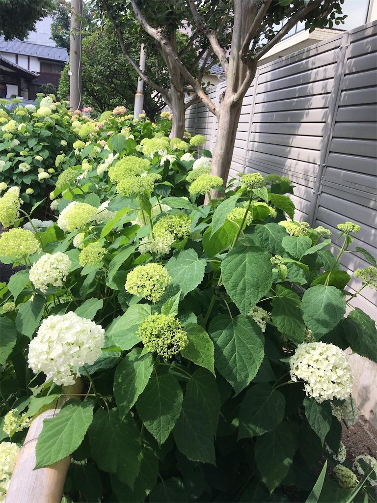 f:id:TokuheiKumagai:20200604225420j:image