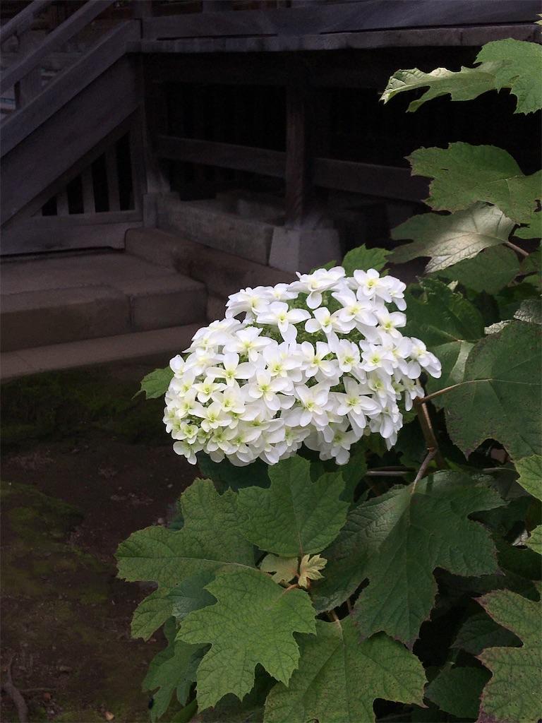 f:id:TokuheiKumagai:20200604225428j:image