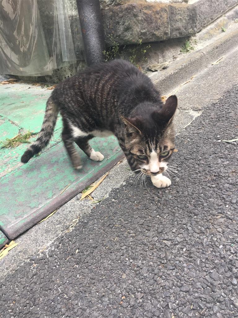 f:id:TokuheiKumagai:20200605223326j:image