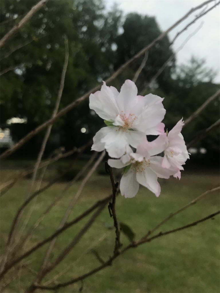 f:id:TokuheiKumagai:20201007181123j:plain