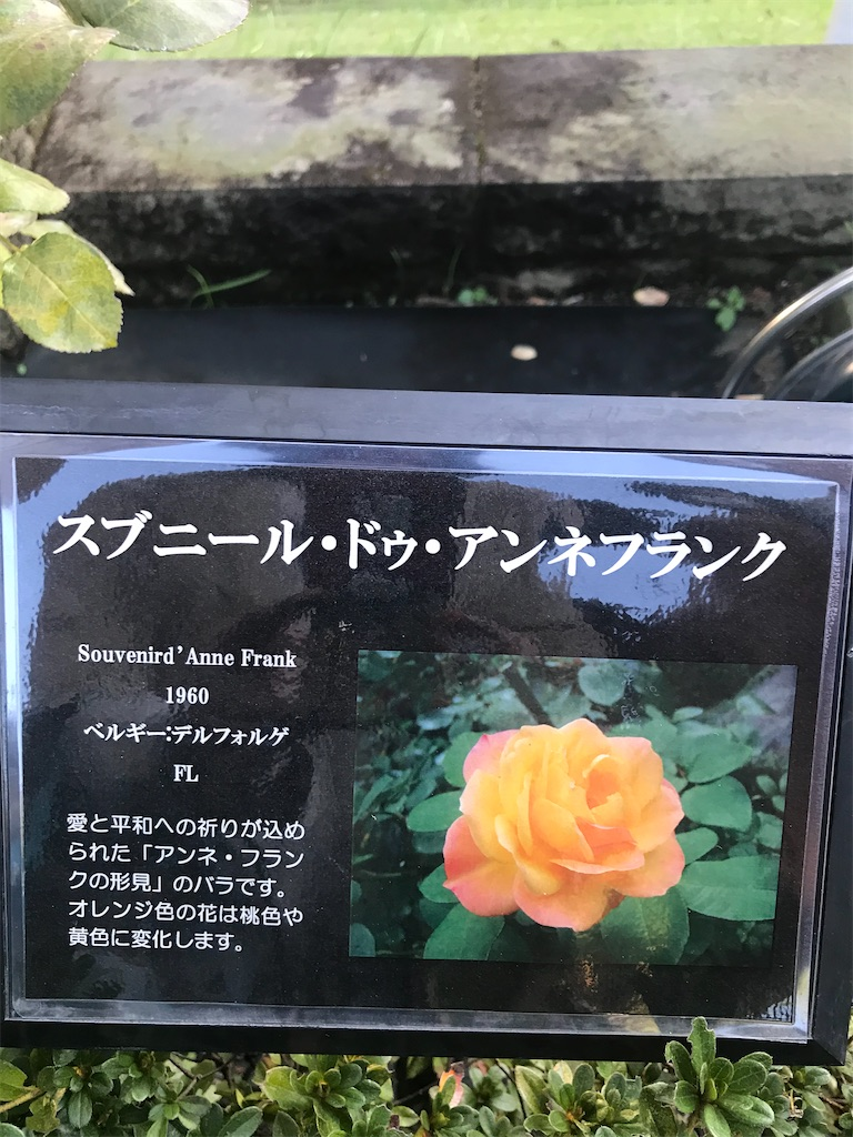 f:id:TokuheiKumagai:20201025224733j:plain