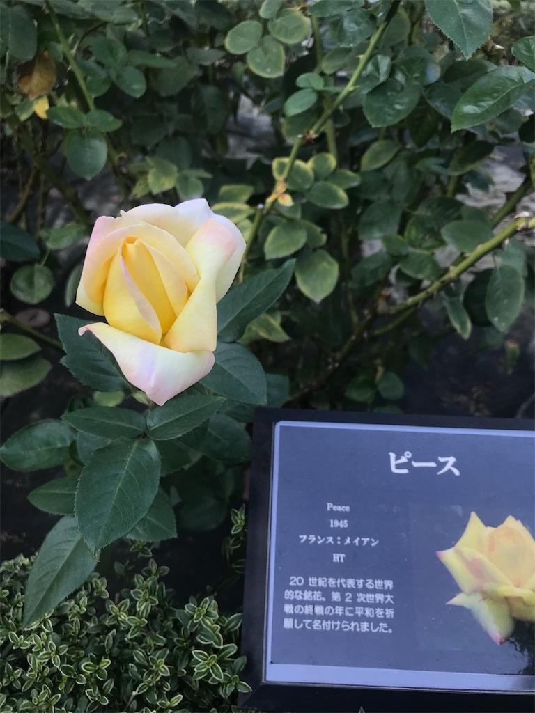 f:id:TokuheiKumagai:20201025224910j:plain