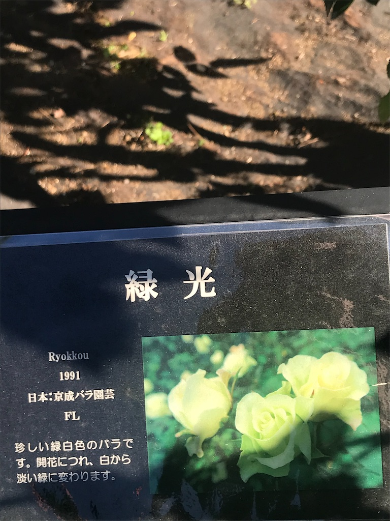 f:id:TokuheiKumagai:20201110200257j:plain