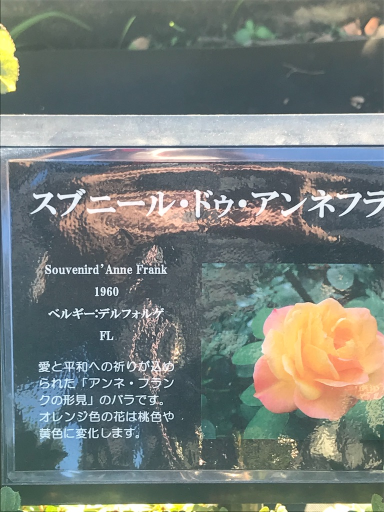 f:id:TokuheiKumagai:20201110200321j:plain