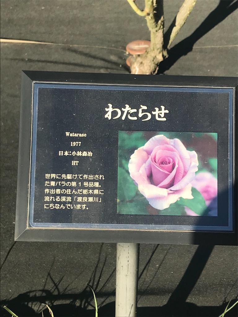 f:id:TokuheiKumagai:20201110202714j:plain