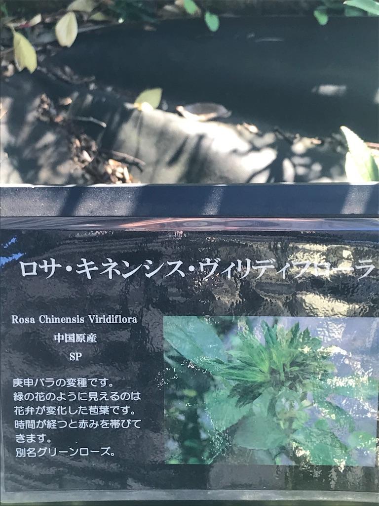 f:id:TokuheiKumagai:20201110204746j:plain