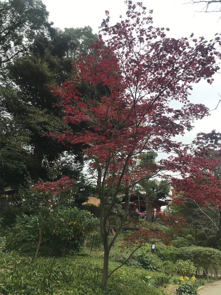 f:id:TokuheiKumagai:20201112230301j:plain