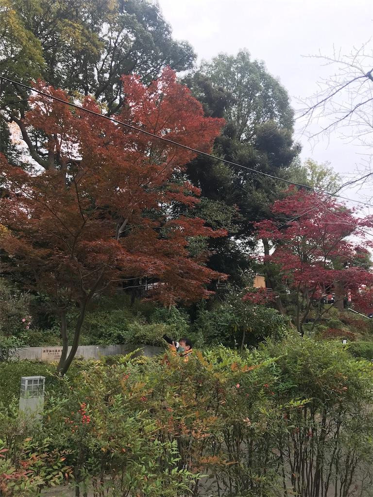 f:id:TokuheiKumagai:20201112230333j:plain