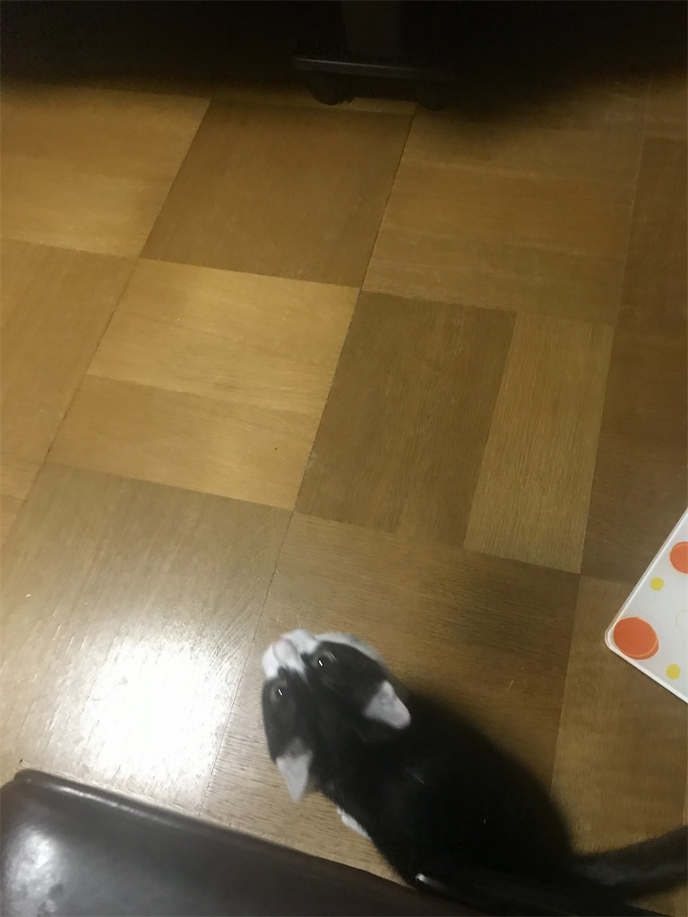 f:id:TokuheiKumagai:20201229210159j:plain