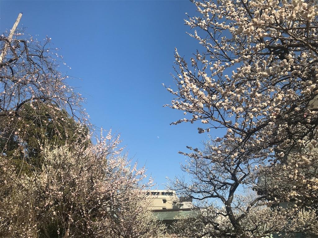 f:id:TokuheiKumagai:20210222204345j:plain