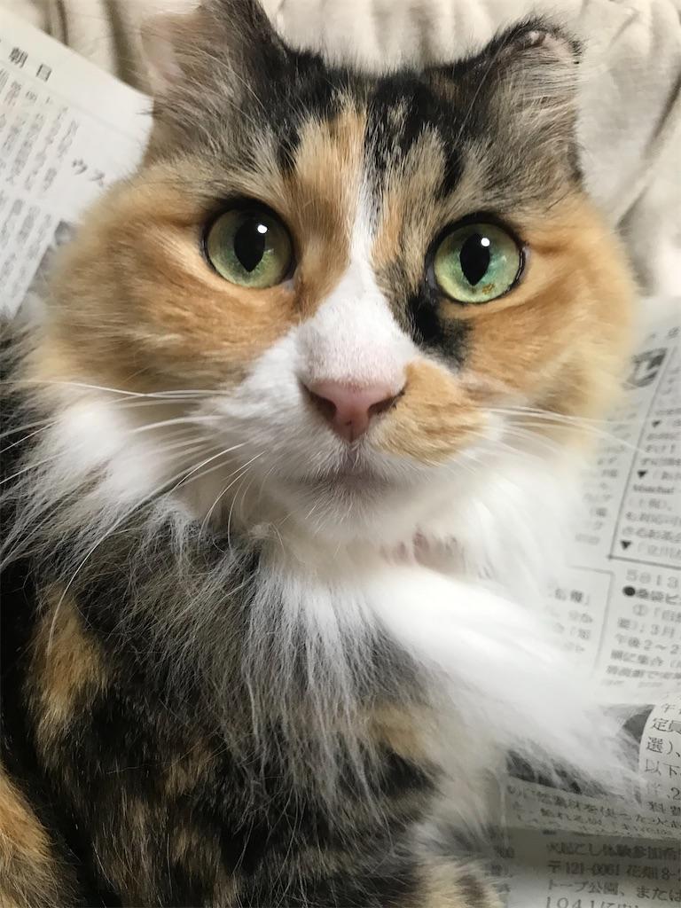 f:id:TokuheiKumagai:20210304200808j:plain