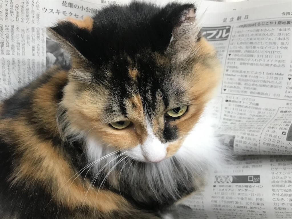 f:id:TokuheiKumagai:20210304200811j:plain