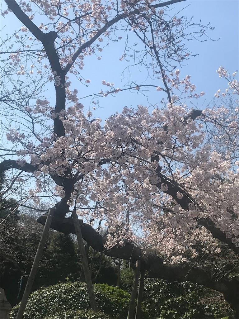f:id:TokuheiKumagai:20210318204456j:plain