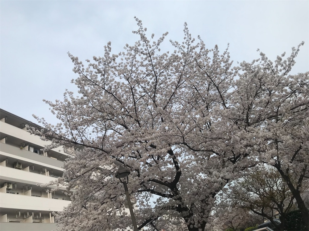 f:id:TokuheiKumagai:20210328134942j:plain