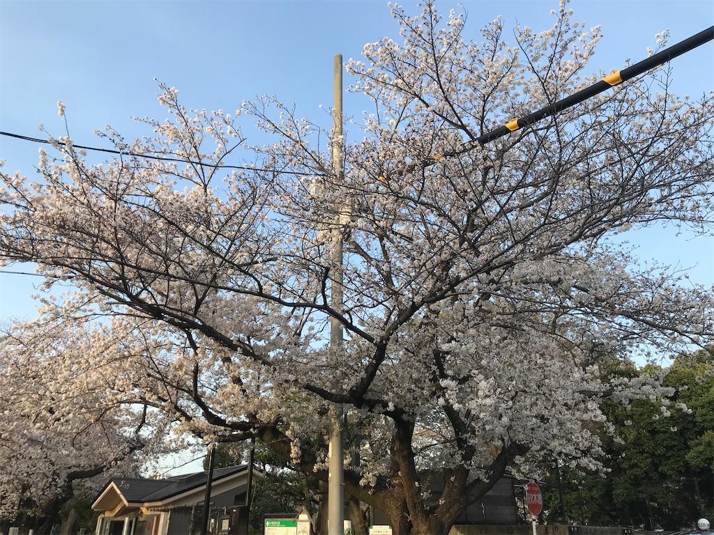 f:id:TokuheiKumagai:20210329223726j:plain