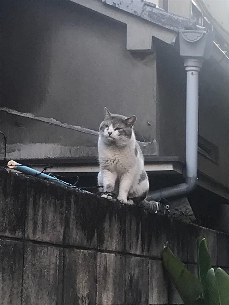 f:id:TokuheiKumagai:20210407181711j:plain