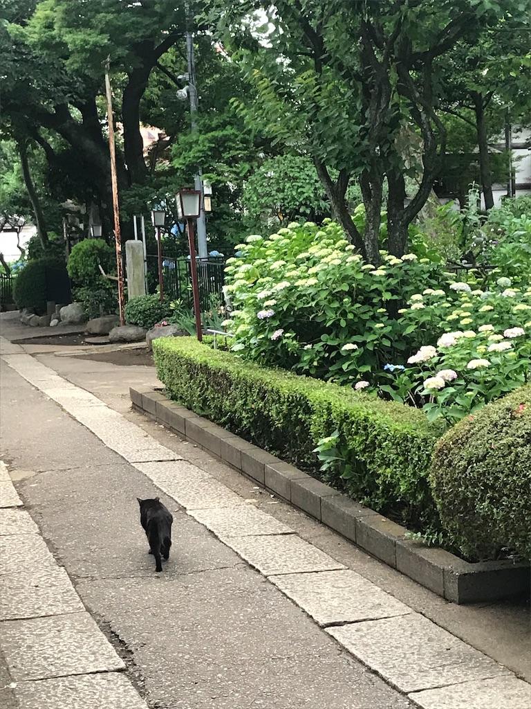 f:id:TokuheiKumagai:20210523120006j:plain