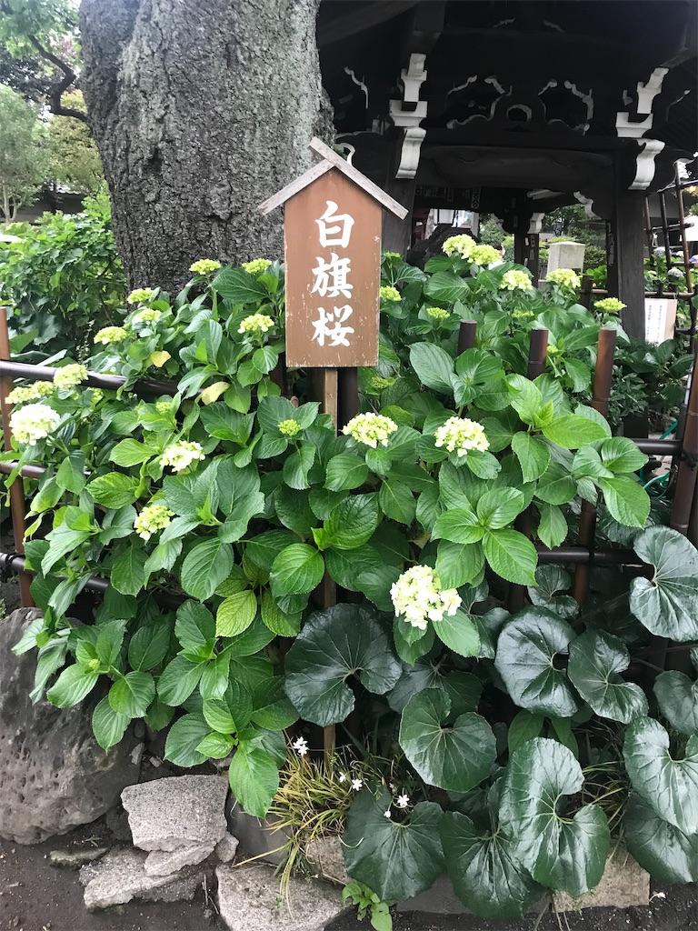 f:id:TokuheiKumagai:20210523120211j:plain