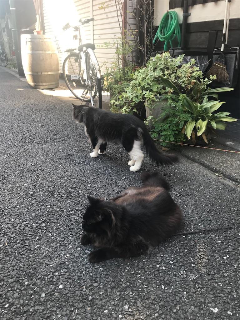 f:id:TokuheiKumagai:20210723191945j:image